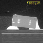 BSE SEM image of a microsection of the device as soldered on the PCBA.
